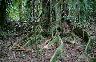 Photo: Puiden juuria - ja maa, jossa ei juuri kasvanut mitään vihreää, sillä valoa ei maahan asti riitä kovin paljoa