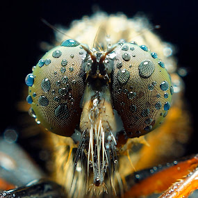 by Abgtamz Ally - Animals Insects & Spiders ( macro, nature up close )