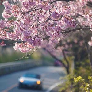 ロードスター NCEC 2011 RS 6MTのカスタム事例画像 Yuki_Katsuyamaさんの2019年04月08日00:56の投稿