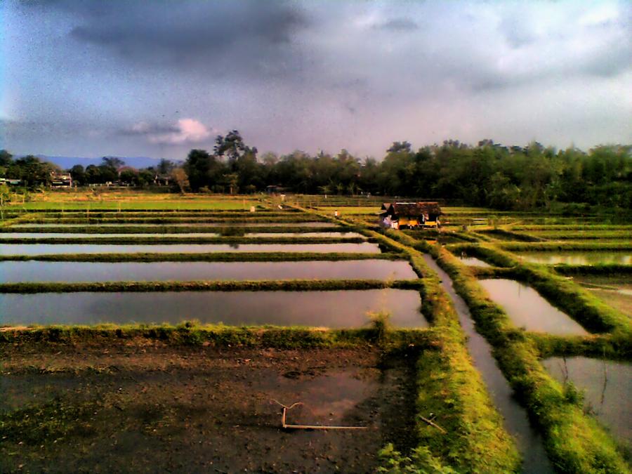 field by Soeyix Fadilo - Instagram & Mobile Other