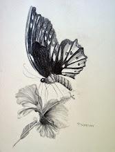 Photo: Butterfly in pencil - sideways