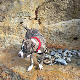 Felon, having a very fun day at the coast.  Photo by Janet Young-Abeyta~ by Janet Young- Abeyta - Landscapes Caves & Formations