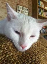 Photo: Cat Macro
