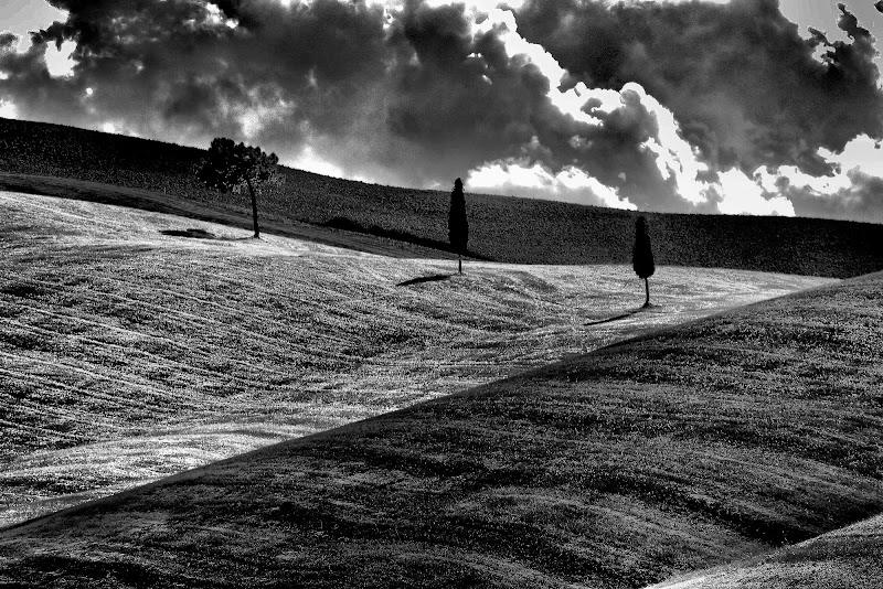 ombre nei campi di ruggeri alessandro