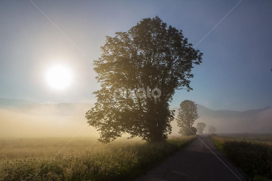 Ash trees in the mist by Stanislav Horacek - Landscapes Prairies, Meadows & Fields