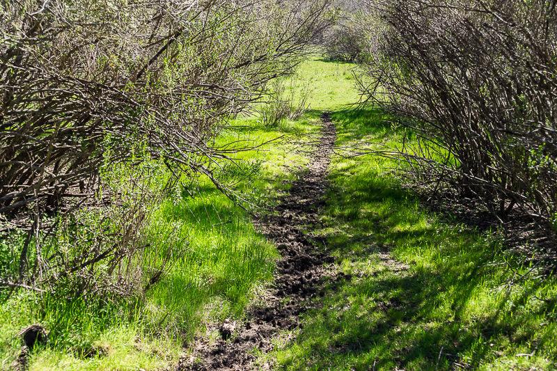 Калифорния. Joseph D. Grant County Park и приключение.