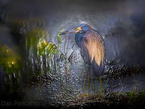 Photo: Shades of Heron