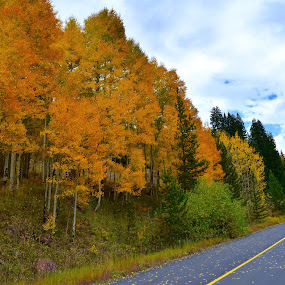 Fall in the Rocky Mountains by Michelle Bergeson - Landscapes Forests ( clouds, fall, trees, yellow, trails, color. orange,  )