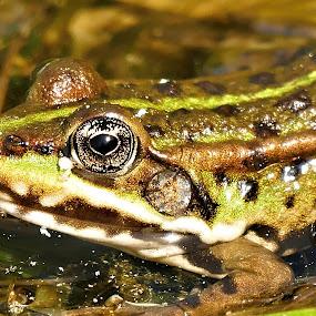 by Lenka Bryndová - Animals Amphibians