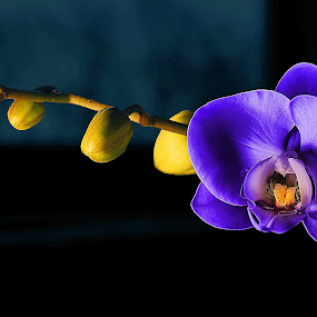 Purple Orchid  by Awais Khalid - Nature Up Close Flowers - 2011-2013