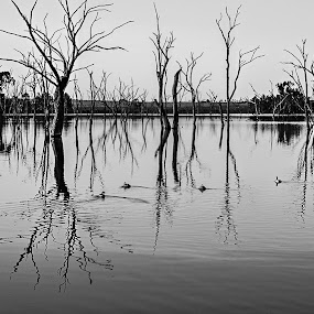Naked Trees by Barry Ooi - Landscapes Waterscapes ( pwcbwlandscapes )