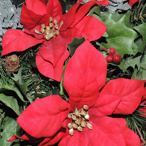 by Laura Cummings - Public Holidays Christmas (  )