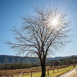 Sunburst by Richard Michael Lingo - Nature Up Close Trees & Bushes ( nature, closeup, sunburst, tree, cades cove,  )