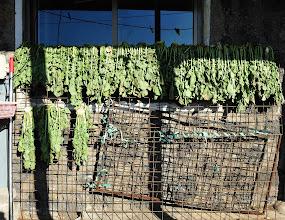 Photo: Sun dried vegetable?
