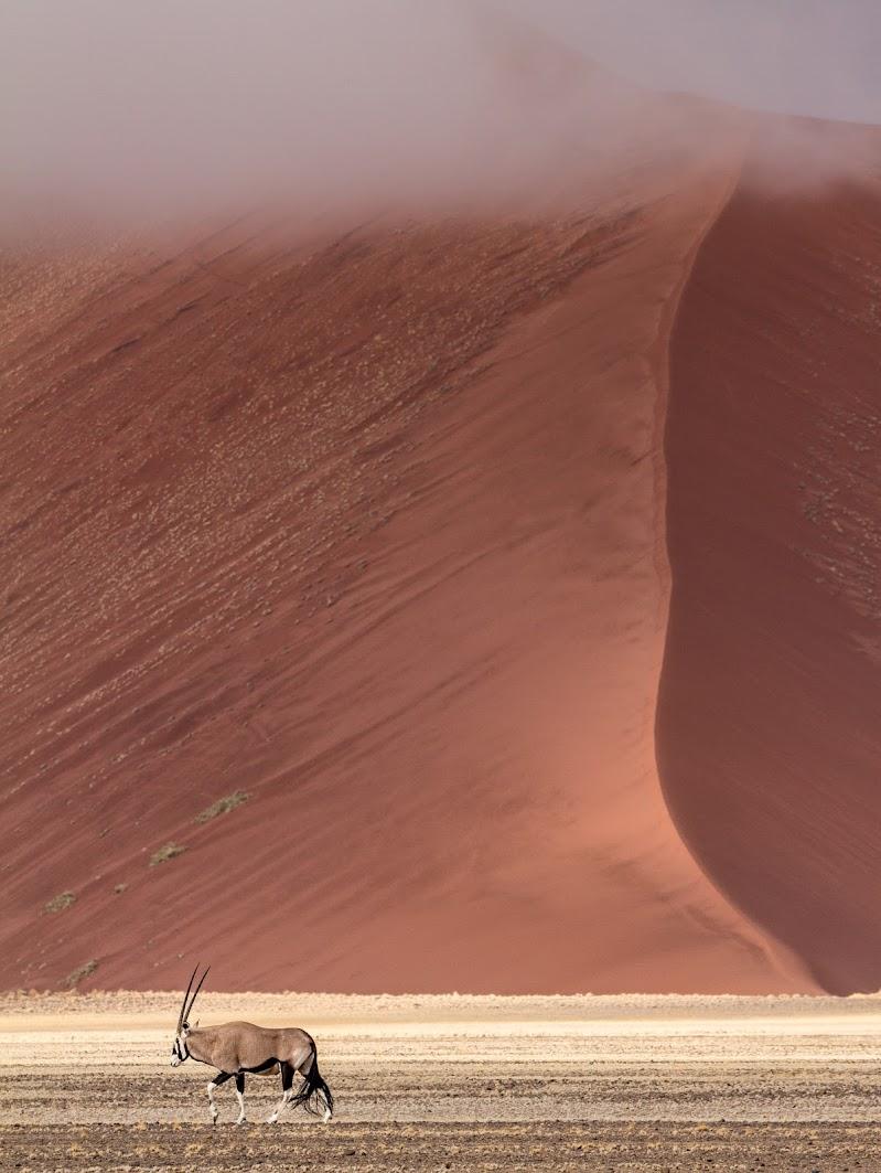 Orix under the dune di Marco Tagliarino
