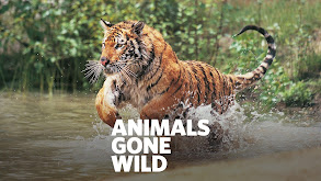 Animals Gone Wild thumbnail