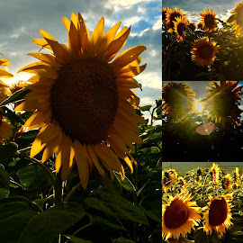 My photo journal Austria Summer 2018 by Ray Anthony Di Greco - Digital Art Things