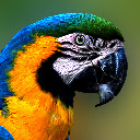 Macaw New Tab Page HD Pop Animals Theme