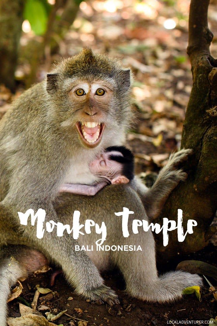 Pura Luhur Uluwatu Temple Monkeys in Bali Indonesia.