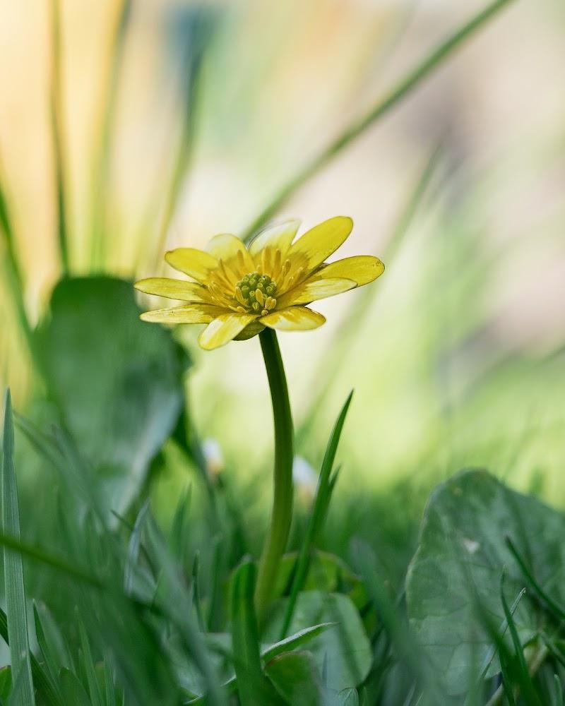 primavera in fiore di stefano10