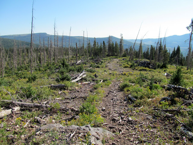 View down the logging road