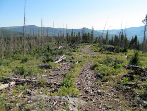 Photo: View down the logging road