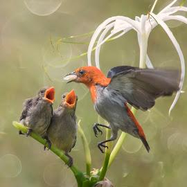 Eating Time by Indrawaty Arifin - Animals Birds ( fly, feeding, little bird, eating, birds,  )