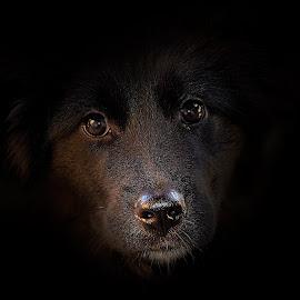 by Manuela Dedić - Animals - Dogs Portraits (  )