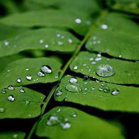 Nature crying... by Paulo Faria - Nature Up Close Other plants