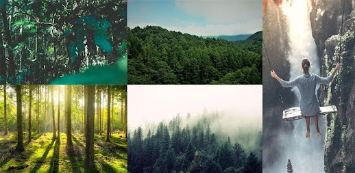 Analog Forest - Palette Forest - Film Filters APK