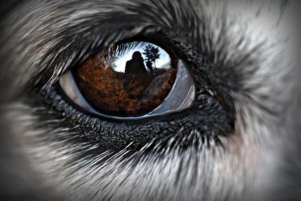 Negli occhi del mio cane di luciano s