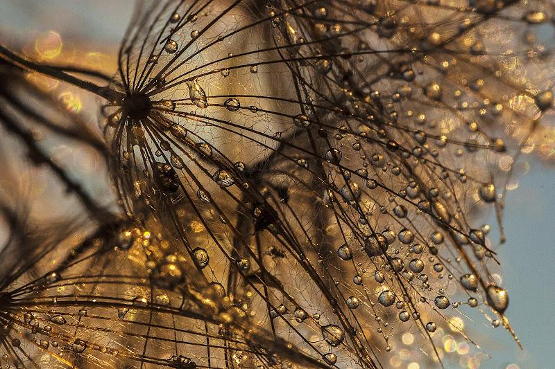 Gold Drops di sandra tamasi