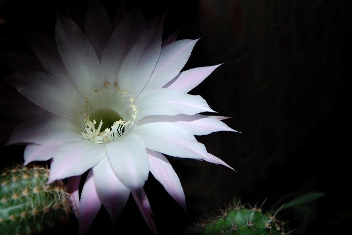 Dalla notte nascono fiori di Dane_ae