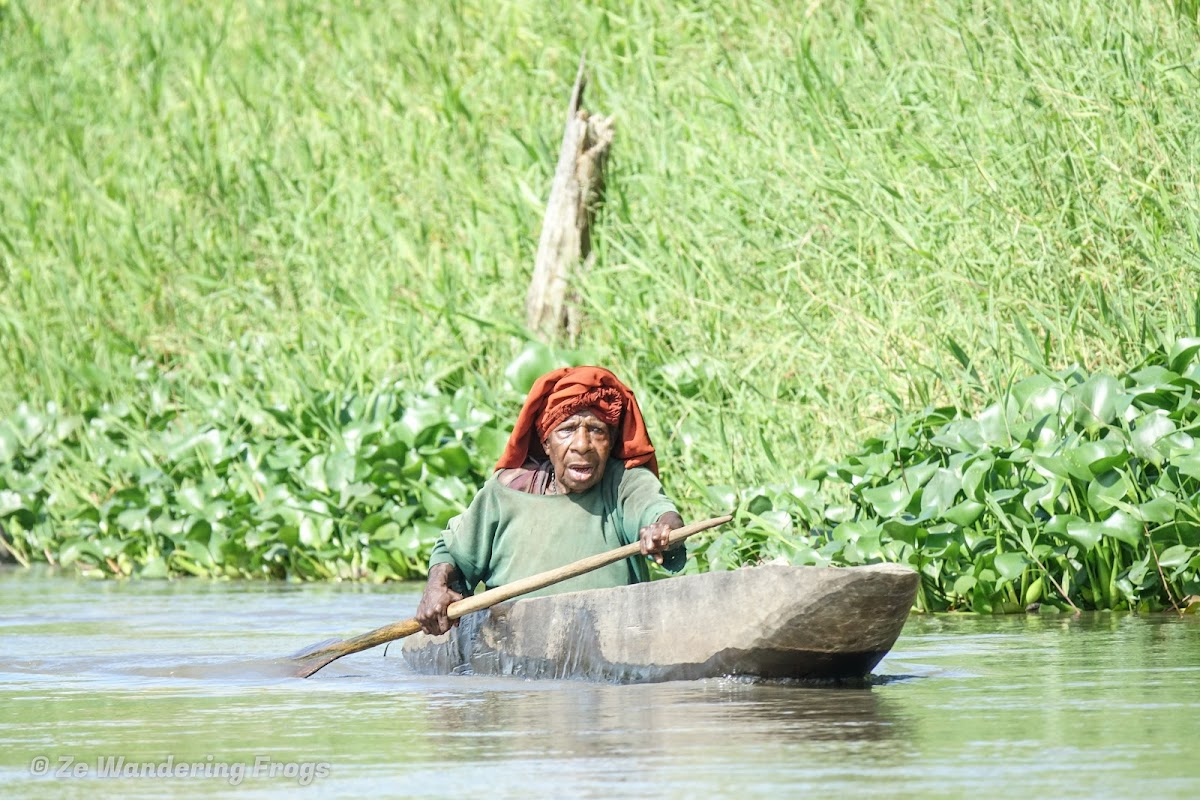 Papua. New Guinea East Sepik River Clans Crocodile Traditions. Old lady on the Sepik River