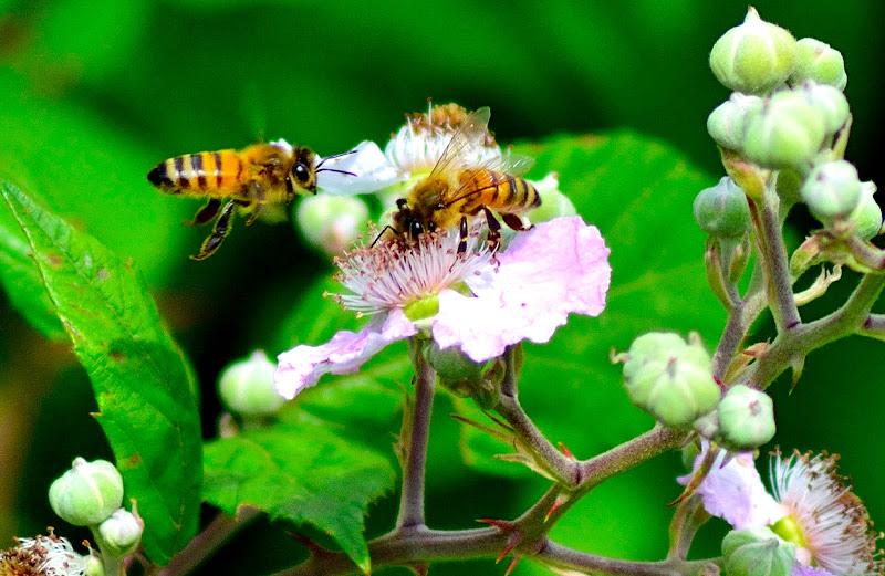 Prime api di stefano_angeli