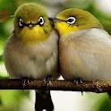 Cute Love Birds LWP icon