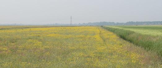 Photo: Het Oude Land van Strijen vanaf de Hoekseweg