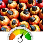 Cashew Quality Analyser