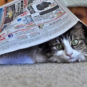 Can't find me! by Kati Garner - Animals - Cats Playing ( playing, cat, hiding, feline, hide 'n seek, eyes,  )