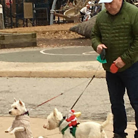 Christmas Attire by Roxanne Dean - Animals - Dogs Playing (  )