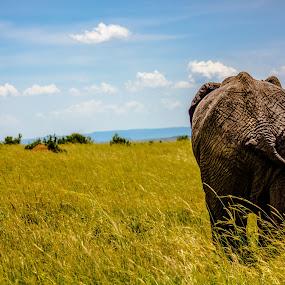 Walk  by Ebtesam Elias - Animals Other ( elephant, masai mara, wildlife, kenya, travel photography )