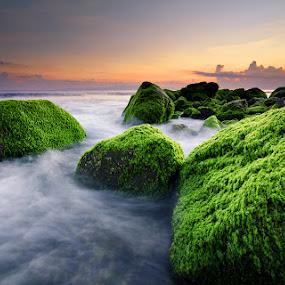 The Green Rocks by Eggy Sayoga - Landscapes Beaches ( waterscape, rock, long exposure, seascape, beach, sunrise, motion, landscape )