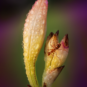 by Sam Song - Flowers Flower Buds