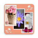 Flower Wallpapers HD icon