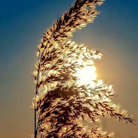 ... by Tomasz Marciniak - Nature Up Close Leaves & Grasses