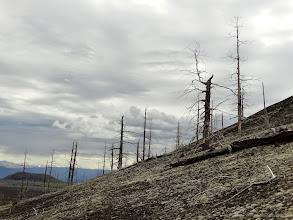 Photo: мертвый лес. начало знакомства