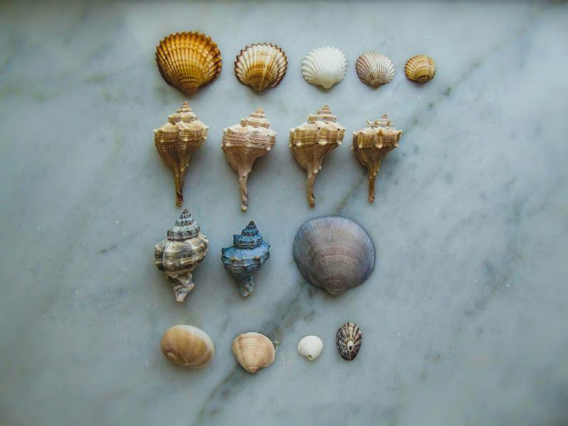 Shells di Roberta Ricciardi