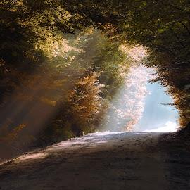 by Alex Jitaru - Landscapes Forests
