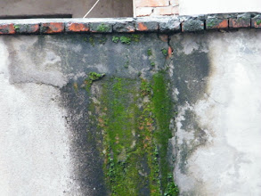 Photo: moss on the wall.