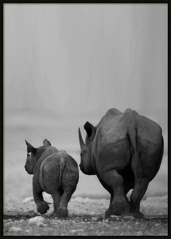 Rhino, Poster
